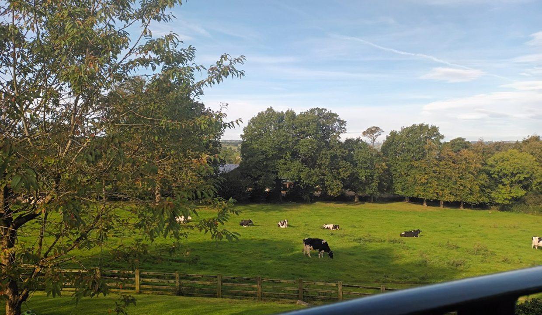9 west court cows